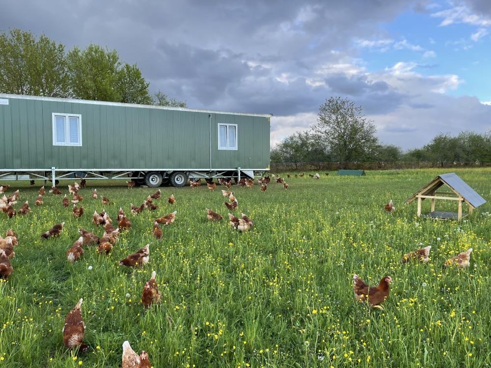 Mobiler Hühnerstall mit Hühner auf der Wiese, Biolandhof Manz